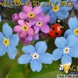 welcometomypagecomment134