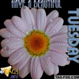 tuesdaycomment329