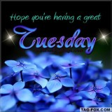 tuesdaycomment432