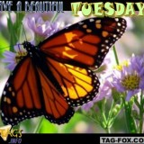 tuesdaycomment526