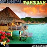 tuesdaycomment532