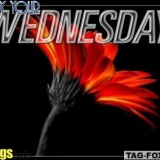 wednesdaycomment338
