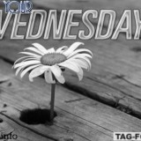 wednesdaycomment343