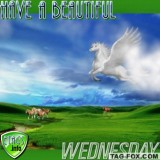 wednesdaycomment382