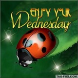 wednesdaycomment387
