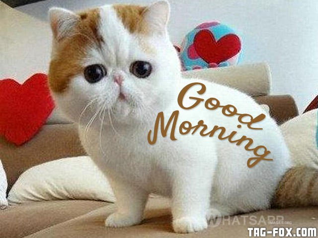 cute-little-cat-good-morning-img.jpg
