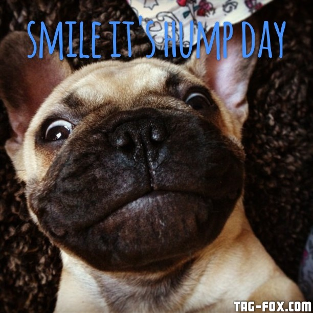 smile-its-hump-day-smile-its-hump-day-wednesday-theadventuresofhex-instagram-followme-hecto.jpg