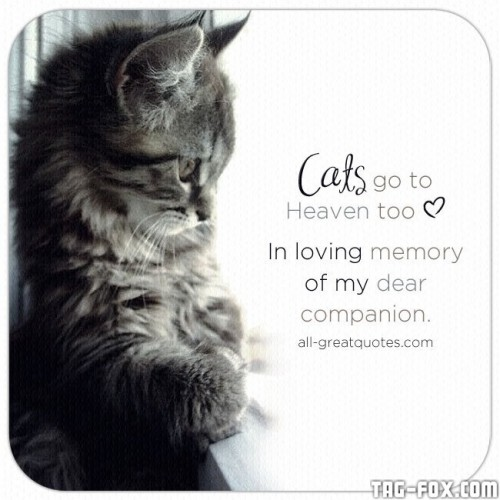 Cats-Heaven--In-loving-memory-of-my-dear-companion.jpg