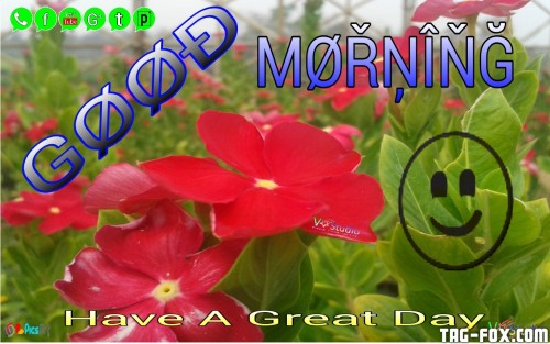 Good-Morning-Have-a-nice-day-vmbhoya-40144640-1280-800.jpg