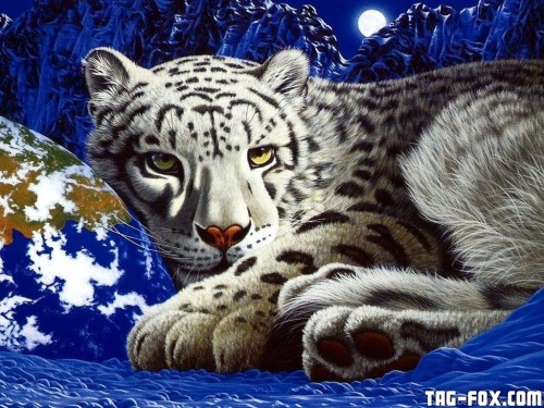 579447_3d-tiger-wallpapers-wallpapers-hd-wide_1024x768_h95f5aa1c1dc26aea.jpg