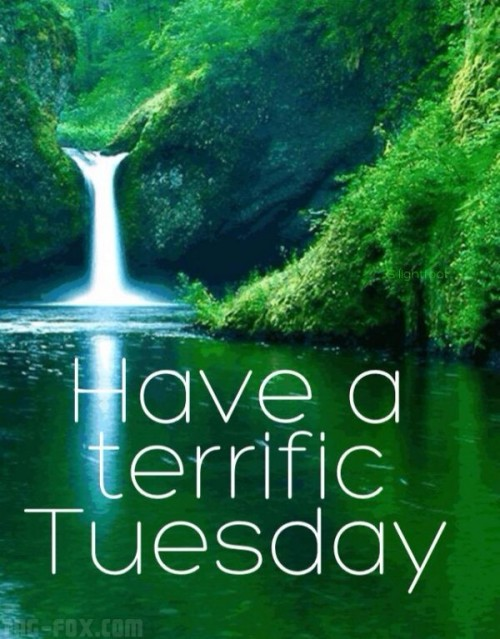 Have-a-terrific-tuesday-600x7673f1c8945504d7a0f.jpg