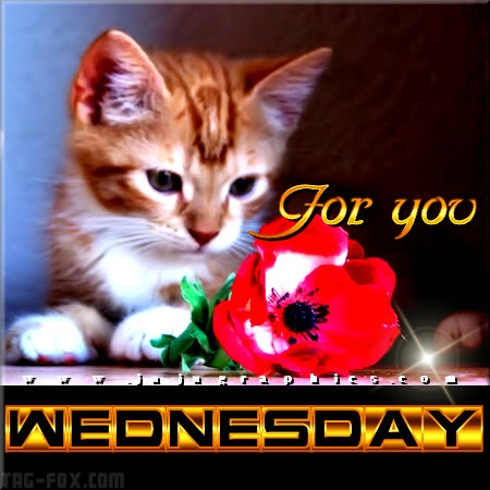 For-you-Wednesday29f7b0aa88c4dc4b.jpg