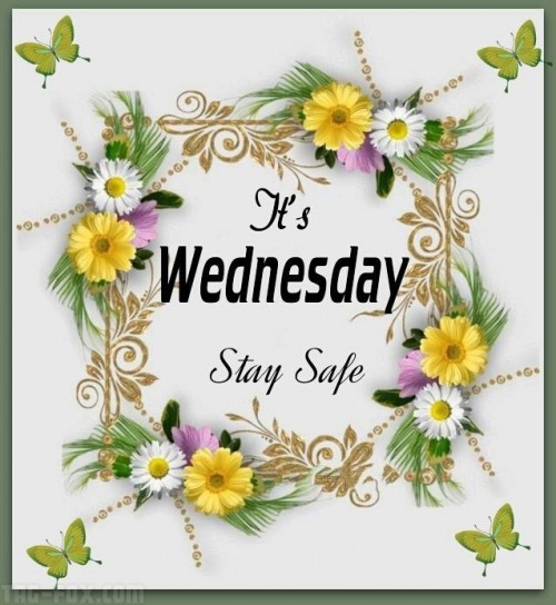 310812-It-s-Wednesday-Stay-Safe295e88564bd408fc.jpg